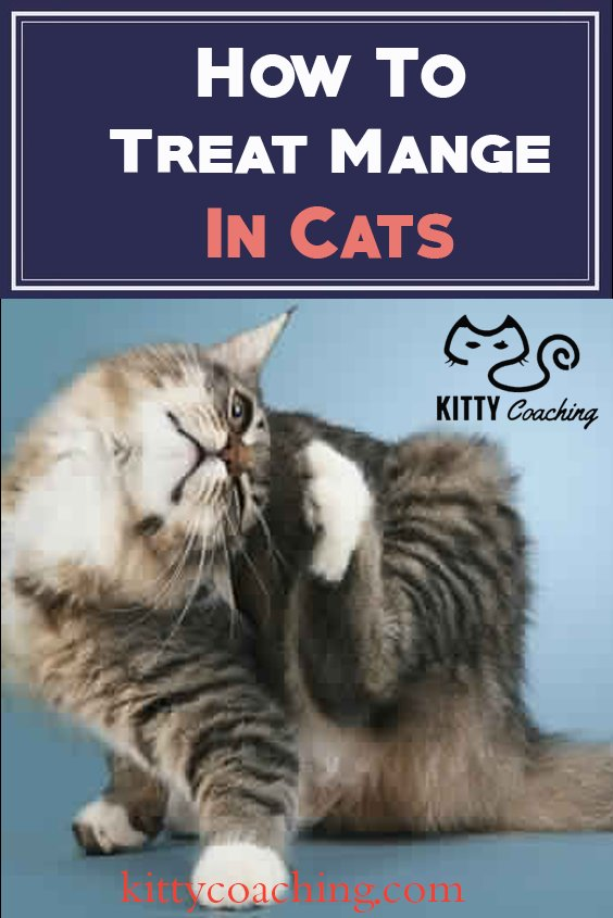 here's how to treat mange in cats