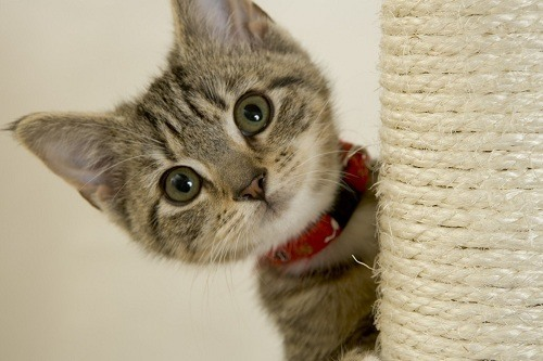 Cute Wided Eyed Kitten Looking at the Camera