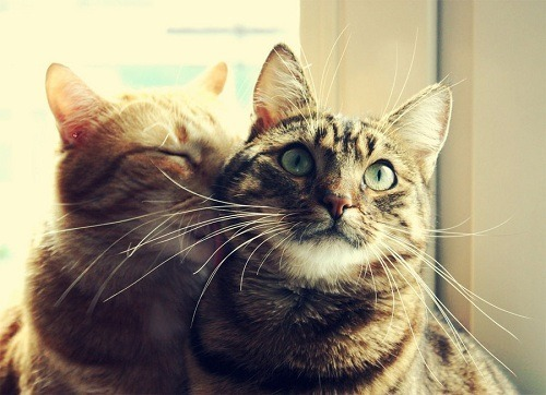 Romantic Cats