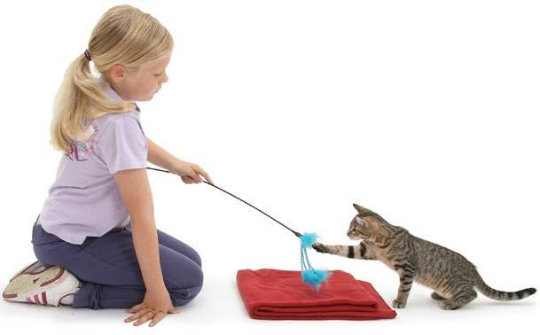Kid Training Cat