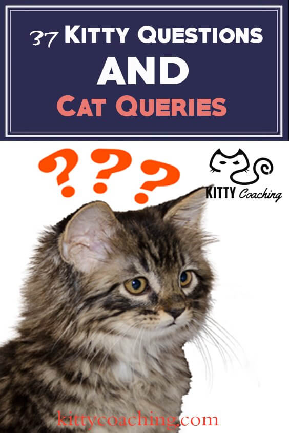 beginner cat questions answered