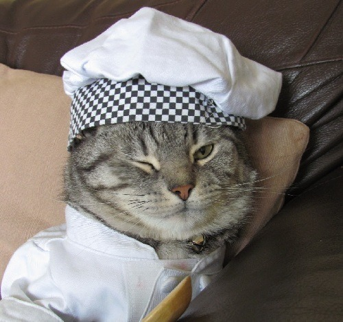 Cute Chef Cat
