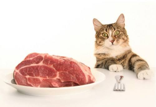 Cat Wants Some Meat