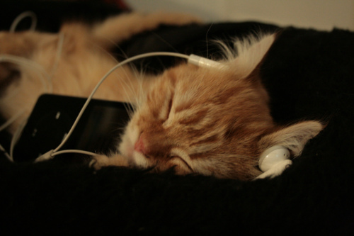 Music can Relax Cats While Spaying