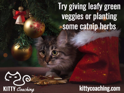 safe christmas treats for cats