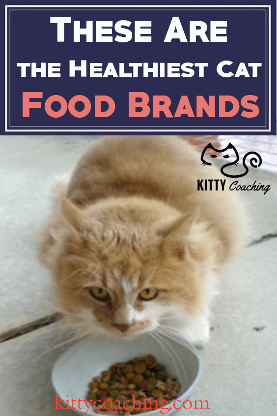 Healthiest Cat Food Brands