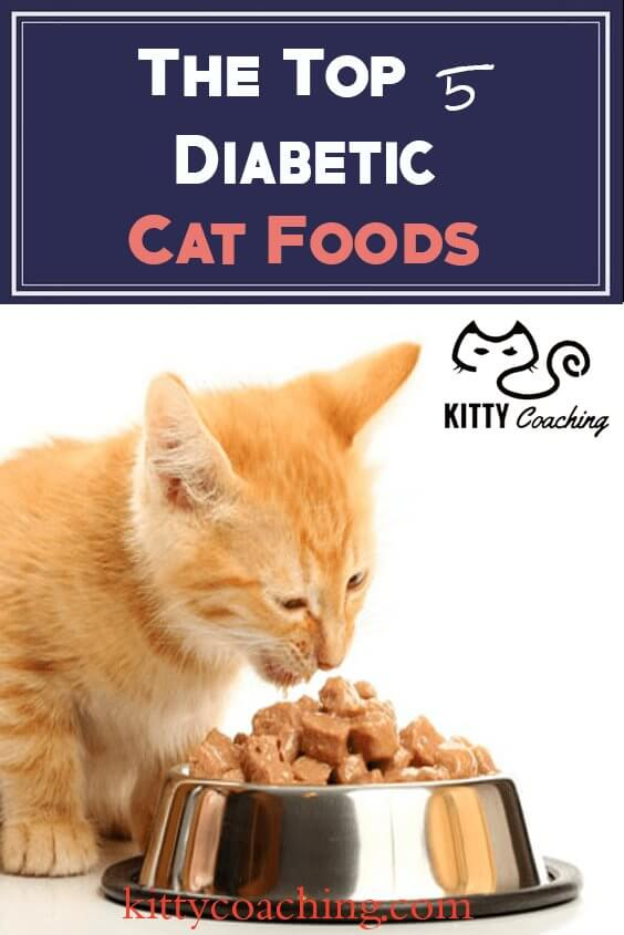 Best Wet Food For Diabetic Cat