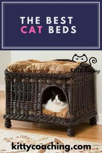 the 5 best cat bed reviews