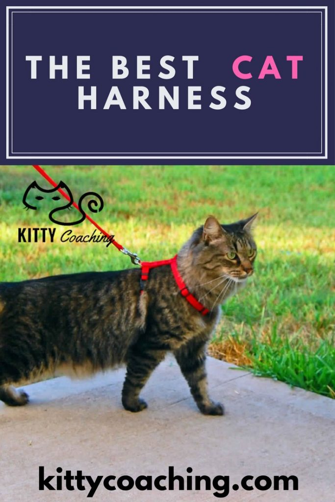 the best cat harness reviews