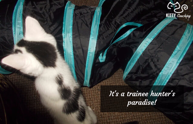 cat tunnel as a training tool